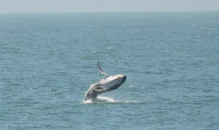 whale watch - avistamiento de ballenas Oceanica Expeditions Mancora Peru
