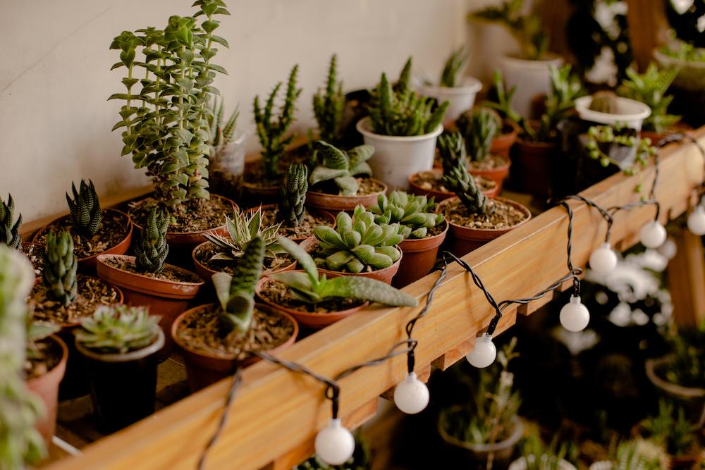 Plantique Patio Jardín - Barranco - La vida de serendipity 1