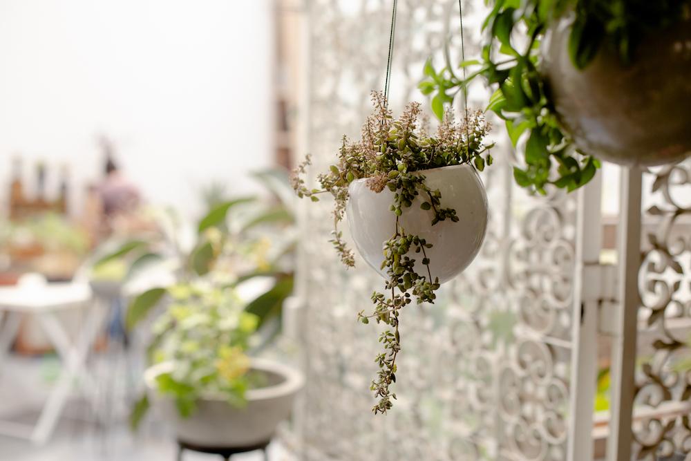 Plantique Patio Jardín - Barranco - La vida de serendipity 9