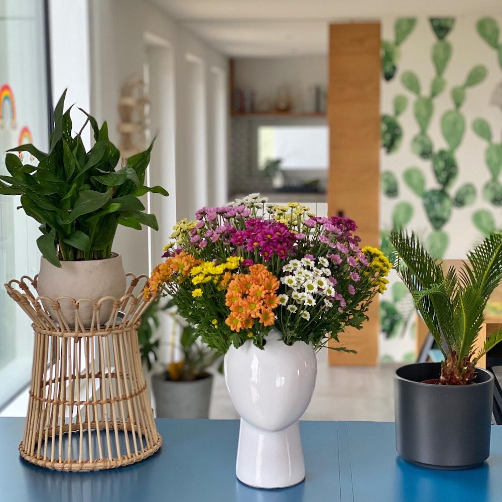 Cómo elegir plantas para la casa