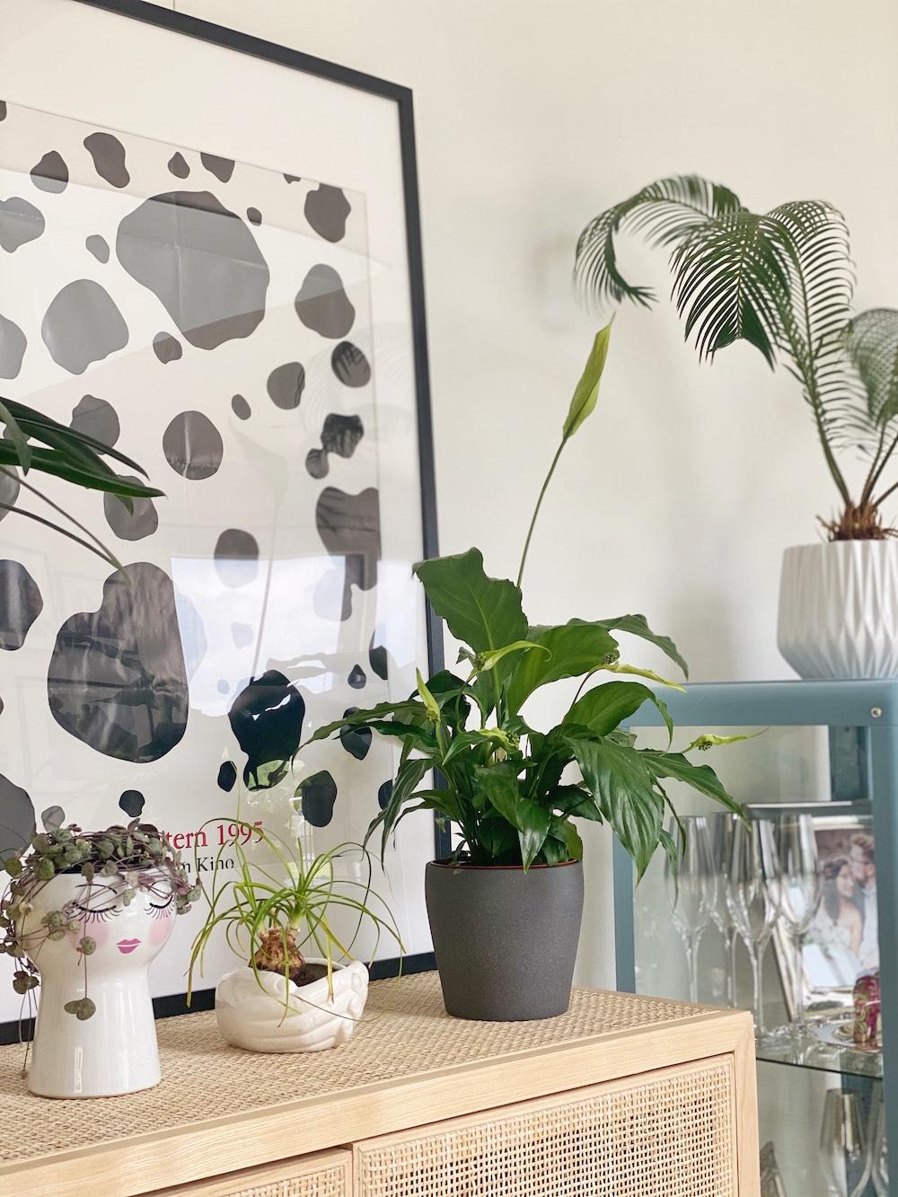 Como cuidar plantas en la casa 2