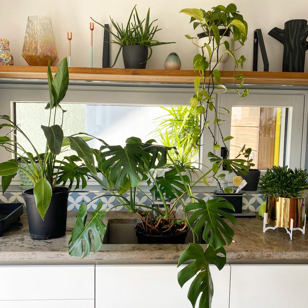 Como cuidar plantas en la casa
